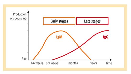 Image result for Ig M IgG